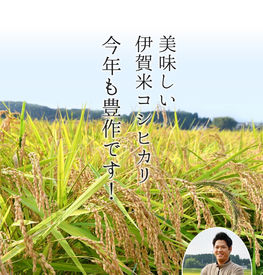 美味しい伊賀米コシヒカリ今年も豊作です!